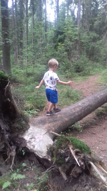 lapsi kaatunut puu metsä