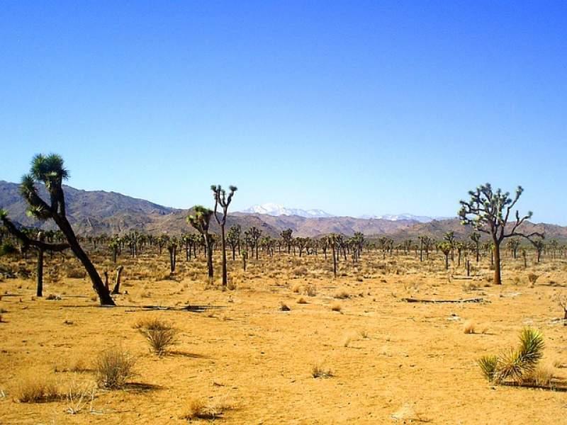 Gurun Mohave Banyak Manyat Sering ditemukan di 5 Tempat Ini