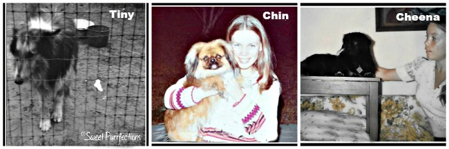Photos of a collie and two Pekingeses owned by Mom Paula in the past