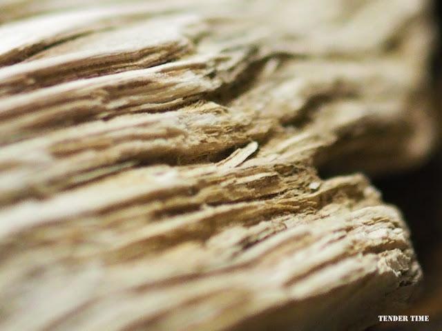 珪化木 和賀仙人鉱山