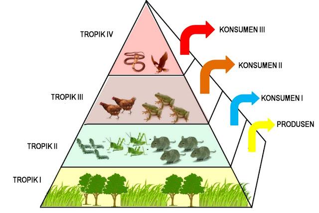 Piramida Rantai Makanan pada Binatang