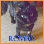 http://animaux76.blogspot.fr/2014/03/romeo.html