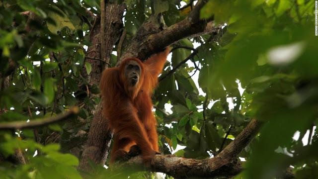 hutan hujan tropis - catatanadi.com