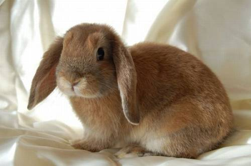 Pretty cute rabbit