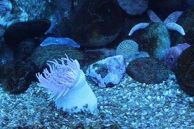 Aquarium Fish: Tips For Beginning Aquarists