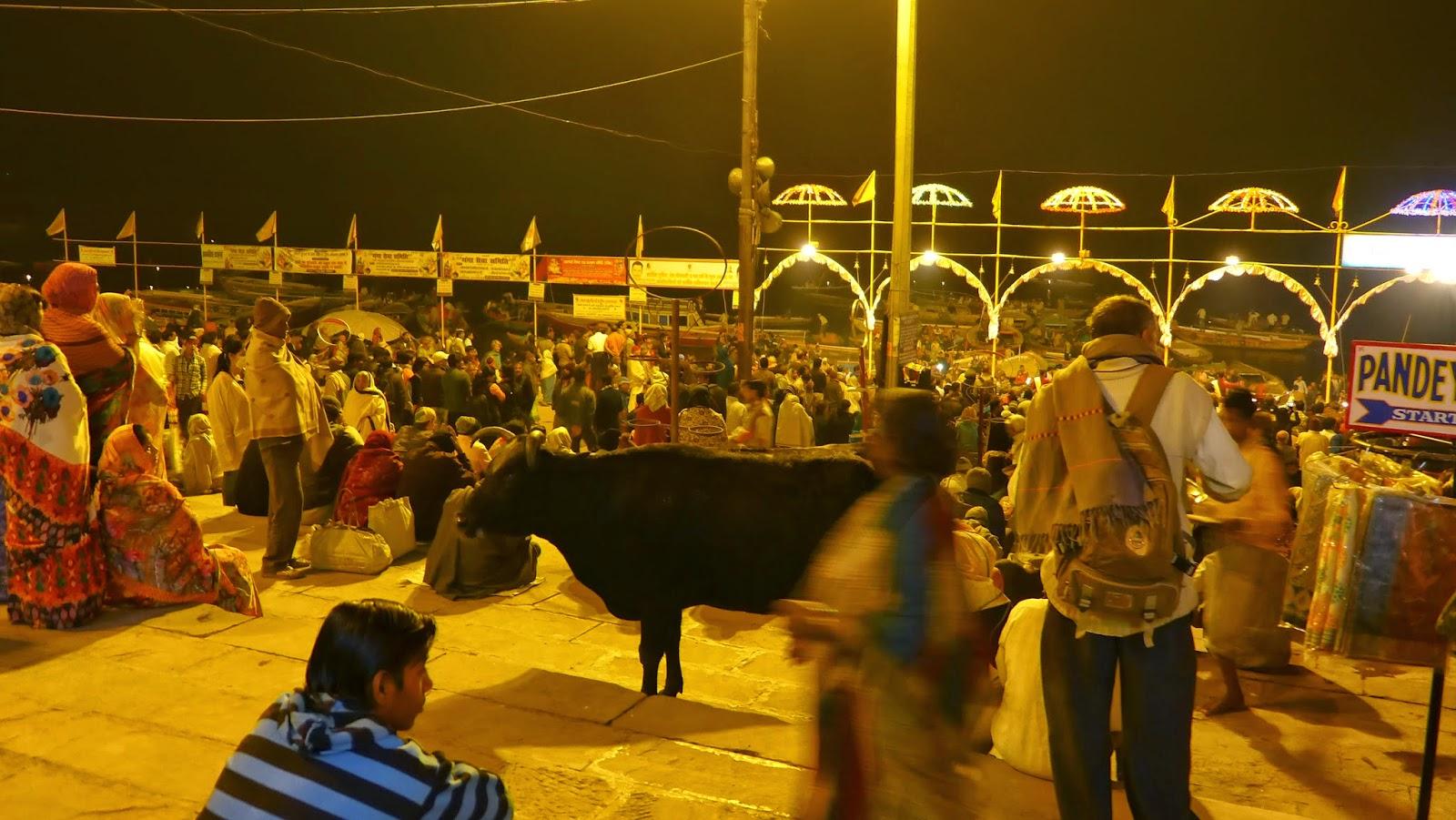 Hindistan'da inek neden kutsal bir hayvandır 62