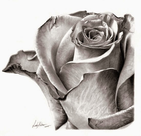 Rose Drawing ~ The All Image