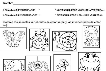 Dibujos Para Colorear De Animales Vertebrados E Invertebrados