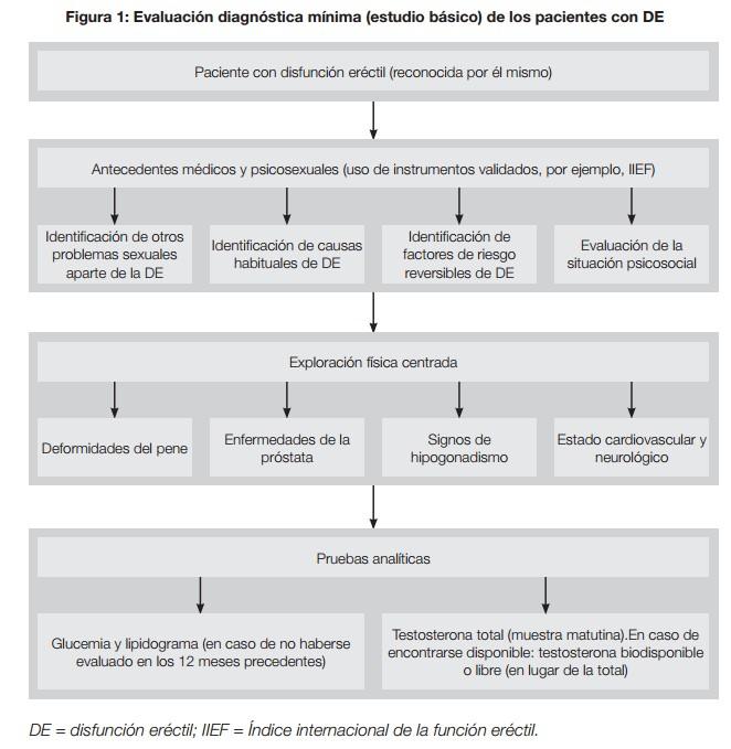 disfunción eréctil baja en prolactina