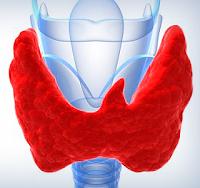 glanda tiroida imagini