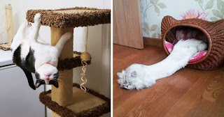 25 Flexible Cats Who Just Won't Obey The Laws of Physics