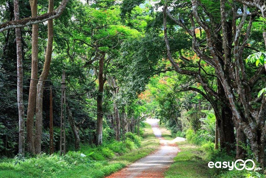 địa điểm du lịch rừng Cúc Phương