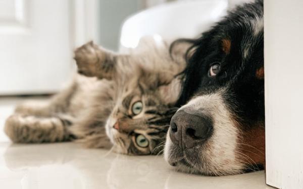 Dog and Cat Snuggling Together Inside