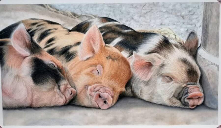 03-Three-happy-little-pigs-Bianca-Buer-www-designstack-co