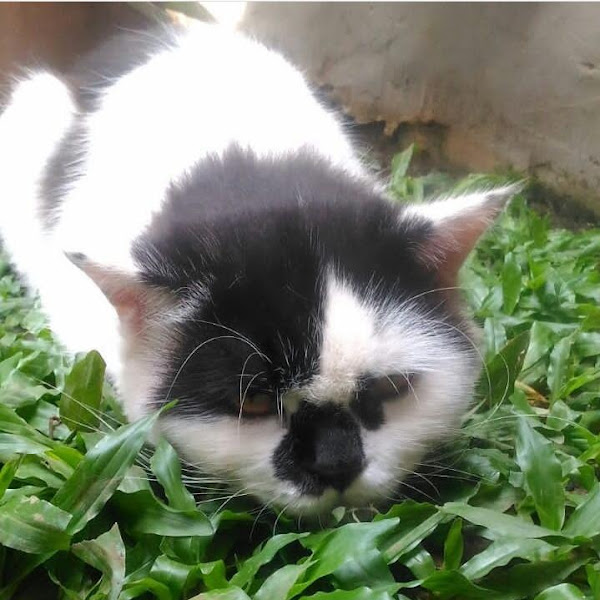 Kisah Tentang Bimo Si Kucing Gembul Yang Sakit-Sakitan