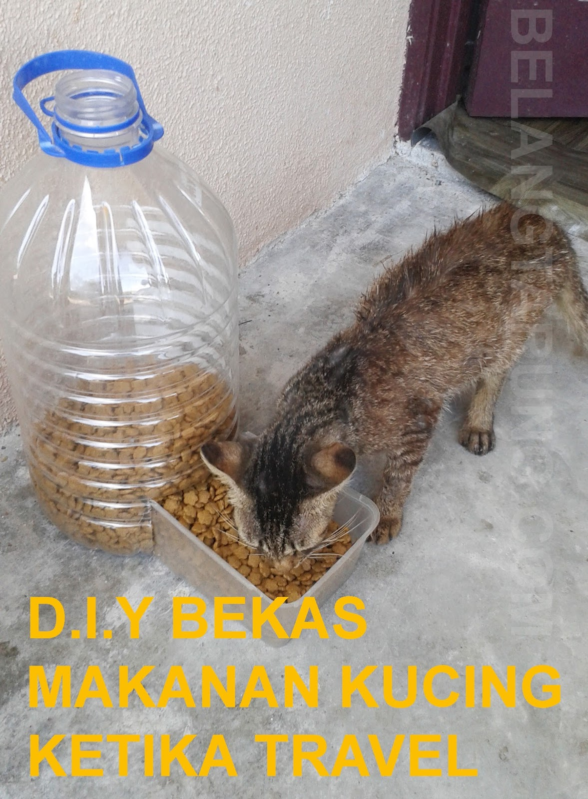 Cara Buat Bekas Makanan Kucing Automatik D I Y Travel Eat
