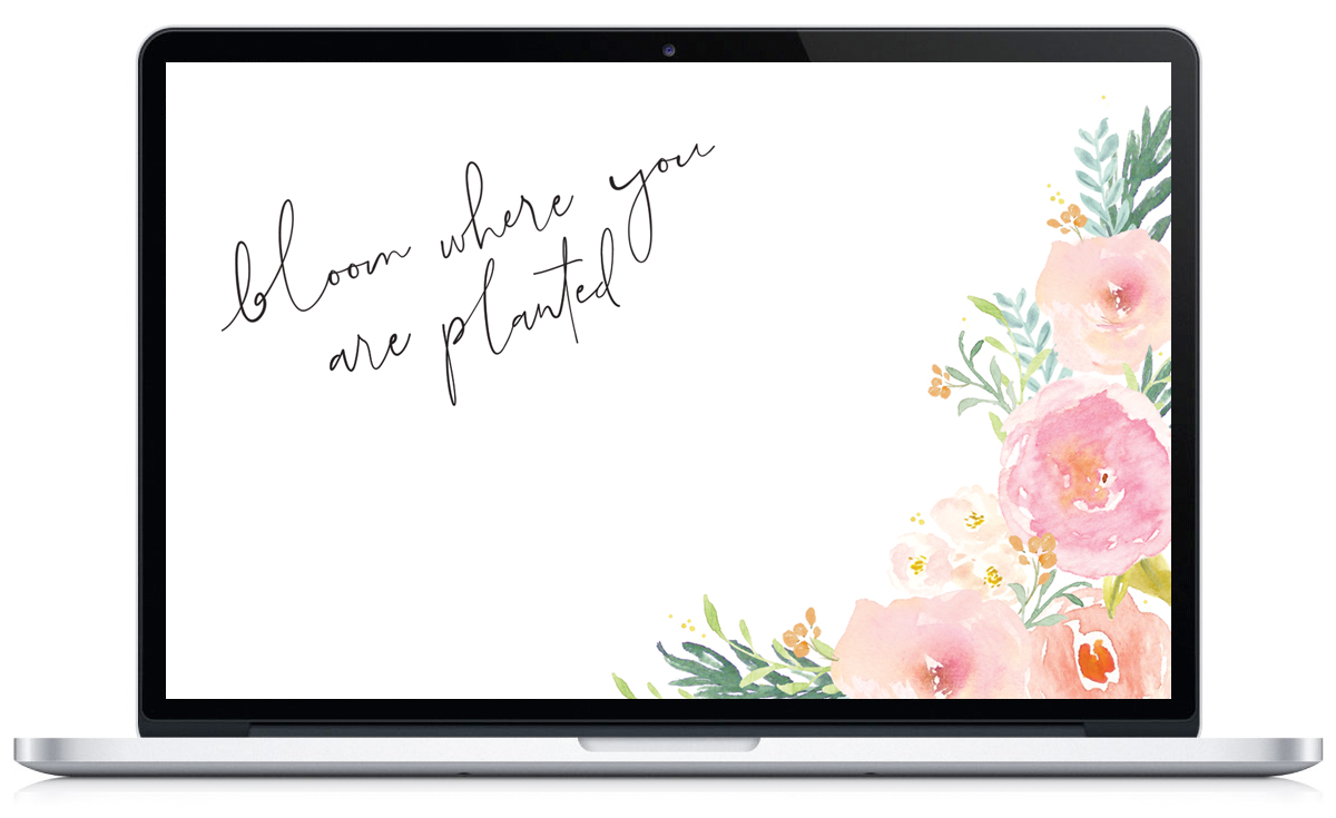 Bloom Where You Are Planted - A Free Floral Desktop Wallpaper via Union Shore Blog