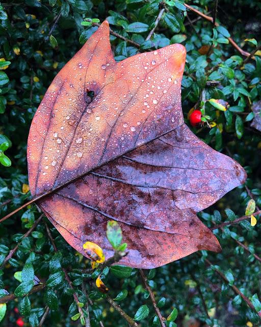Chez Maximka, autumn weather