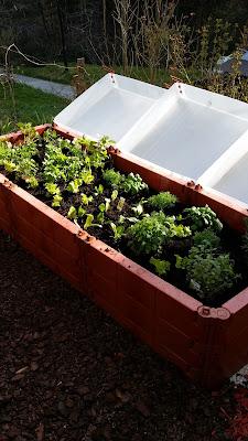 Sebze bahçesi - delikizinbohcası