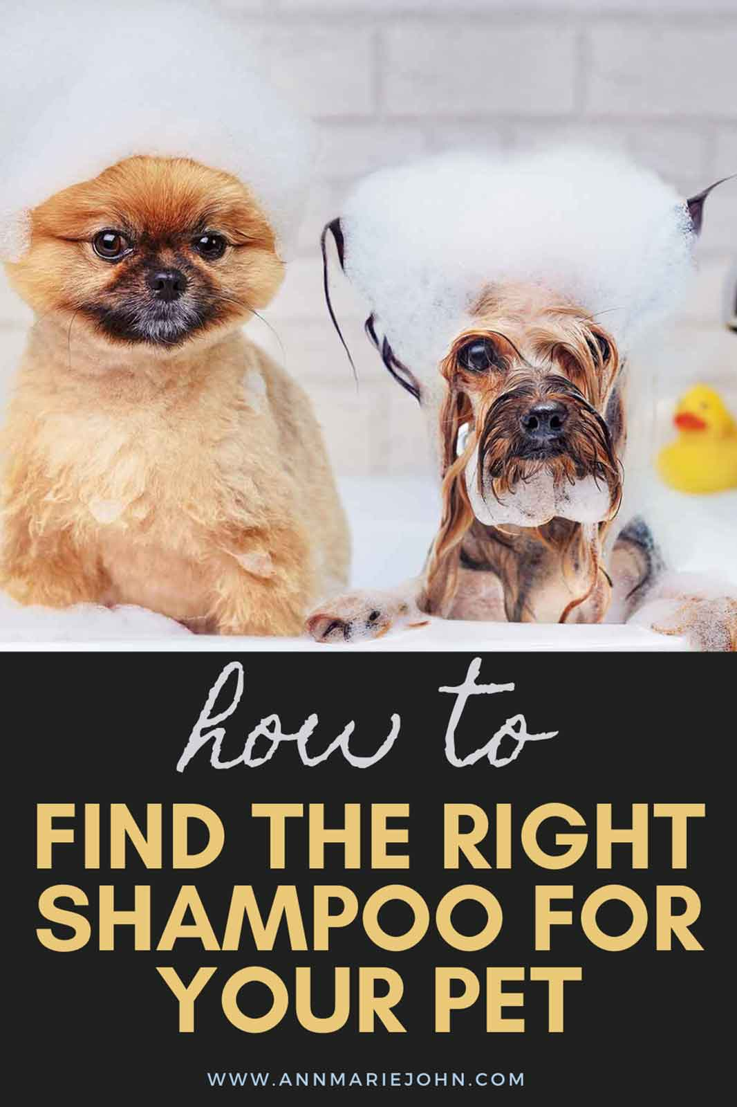 How To Find The Right Shampoo For Your Pet