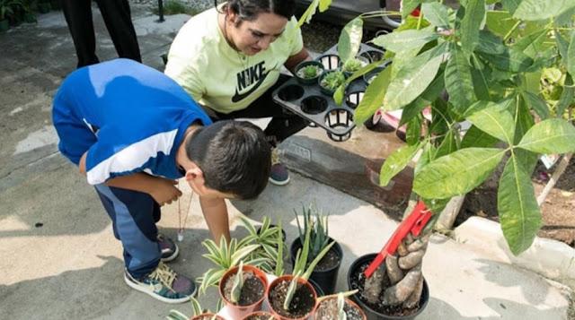 Bisnis Tanaman, Bocah 8 Tahun Mampu Beli Rumah dan Memperbaiki Nasib Keluarga