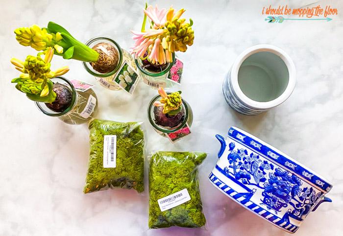Forcing Hyacinths