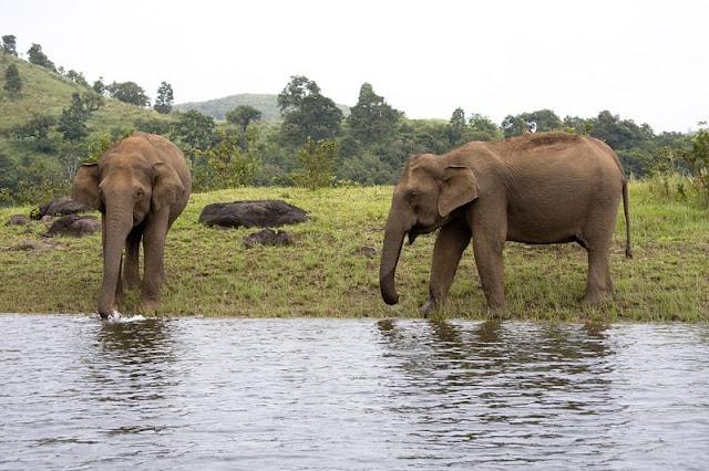 Thekkady, Kerala Tourism