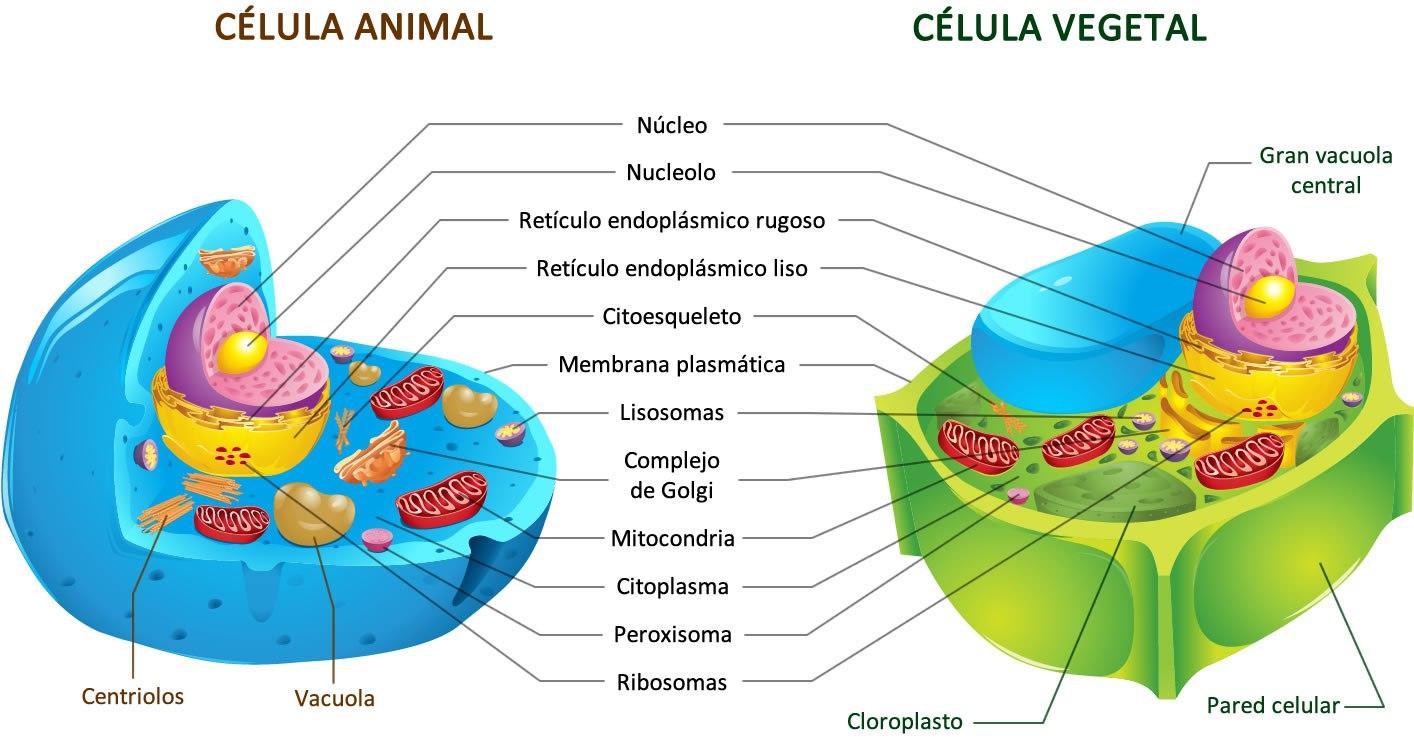 Estrutura Celular Bio Maníacos