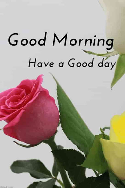 good morning romantic rose