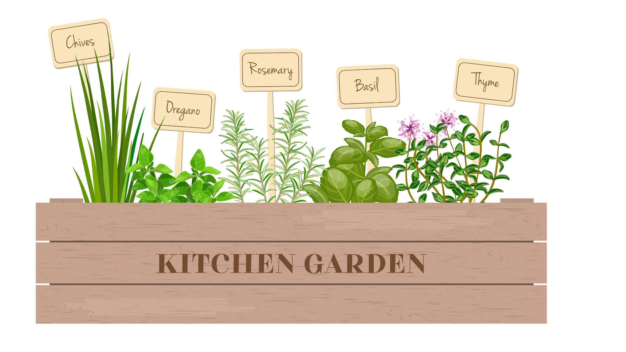 kitchen herbs, witch herbs, herbal witch, green witch, herbal apothecary