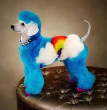 Perro arcoiris.