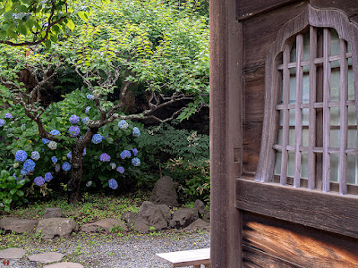 Ajisai (Hydrangea) flowers: Eisho-ji