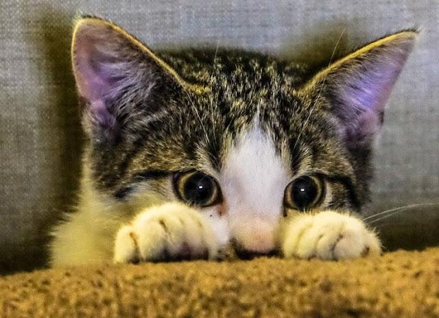 Sterilisasi Kucing