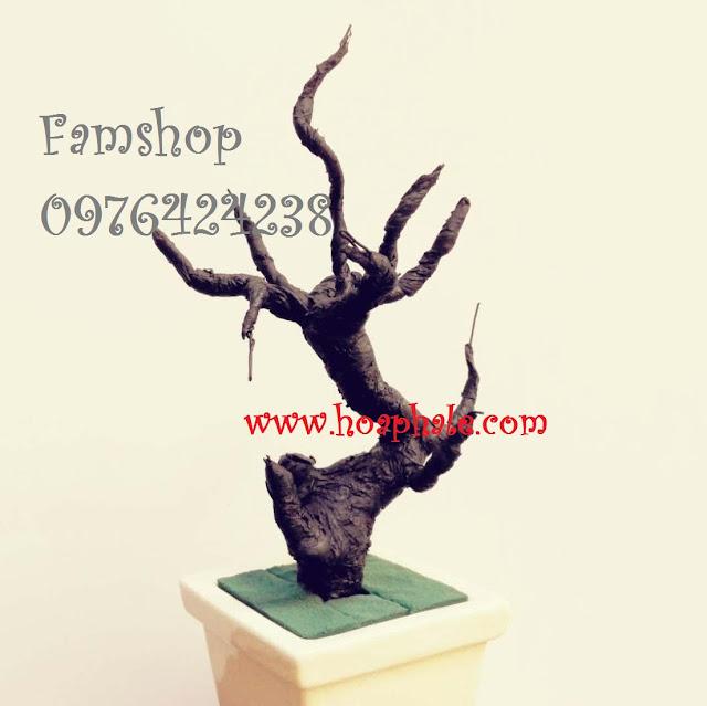 Goc bonsai mai dao tai Cau Giay