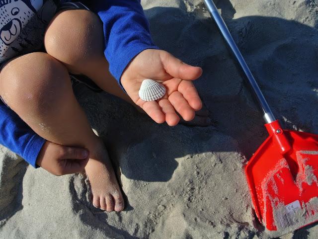 zbieranie muszelek nad brzegiem Morza Bałtyckiego
