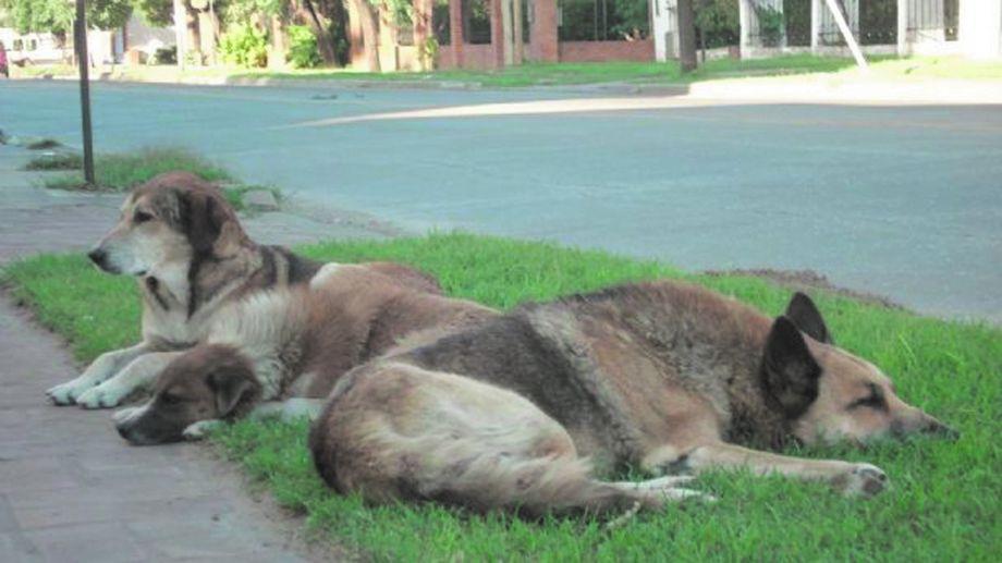 Pesentaron Ley de Protección y Control de perros y gatos en Roca
