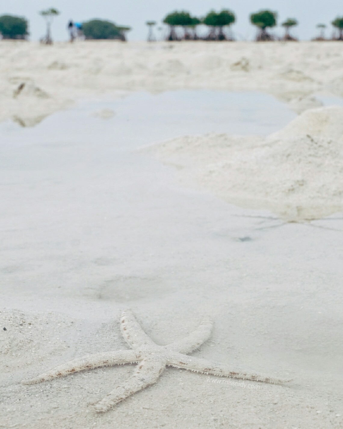 star beach pulau pari