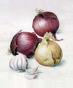 Garlic and Onion cartoon