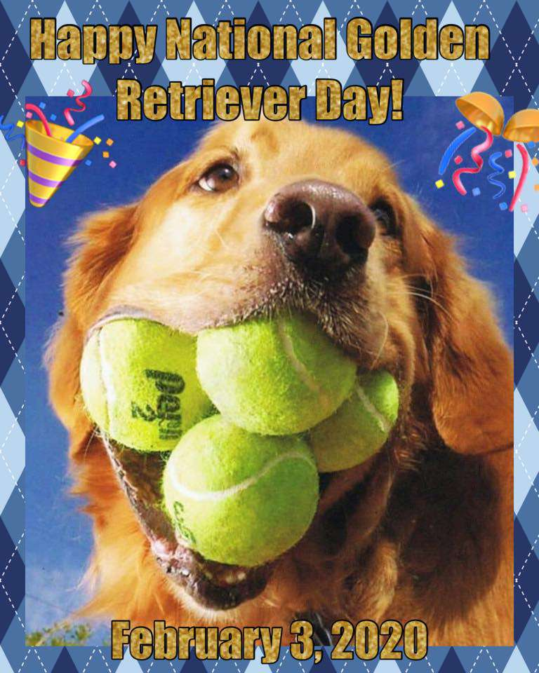 National Golden Retriever Day Wishes Awesome Picture
