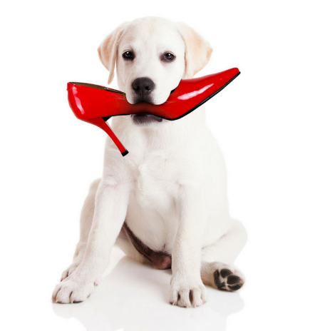 Dog Toys For The Brain Teeth And Feet