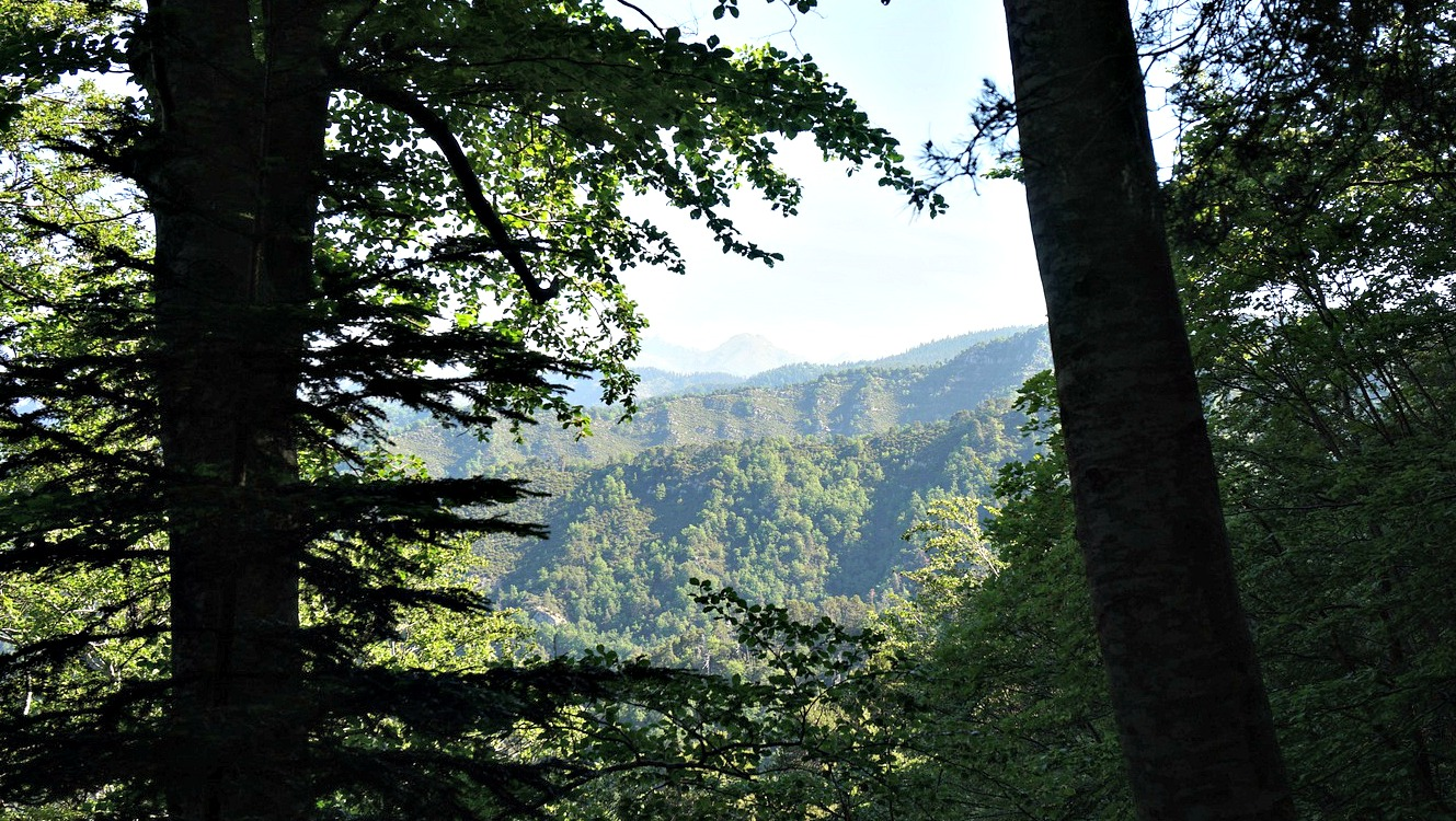 Magic forest of Lucéram
