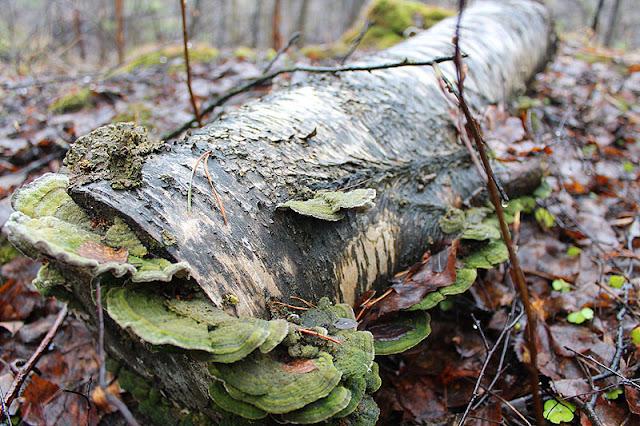 Metsämielellä, Fotodays -voimaa valokuvasta