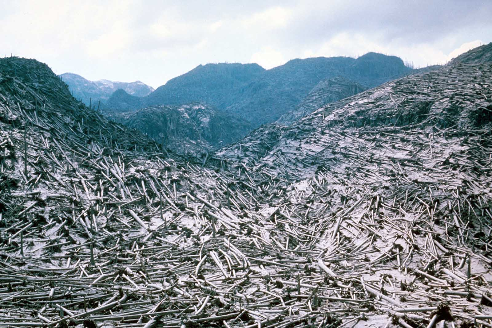 Aerial view of timber blowdown, destroyed by the May 18 eruption of Mount St. Helens, in Skamania County, Washington, on June 8, 1980.
