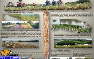 Nâng cấp nhanh chóng hệ thống xử lý nước thải - Xử lý nước thải bằng cỏ Vetiver