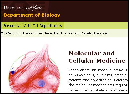 York, University, Linus Pauling, medicina, medicine, ortomolecular, orthomolecular, celular, cellular, nutrición, química, ciencia, biología, molecular, bioquímica