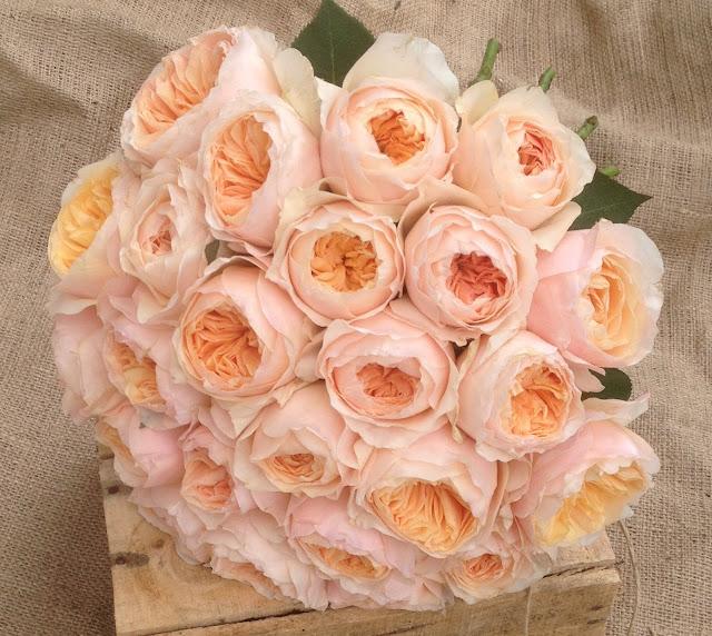 8bb798ee0a5e ROSETTA FLOWERS