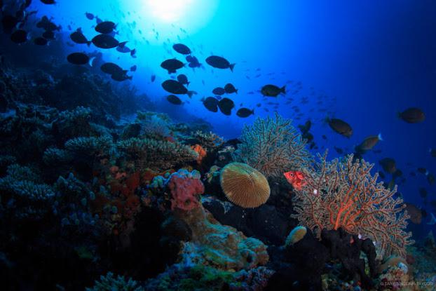 Università Milano-Bicocca e governo delle Maldive insieme per preservare barriera corallina