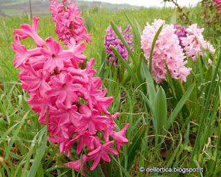 fiori erbe rose ortica fattoria didattica Savigno Zocca Bologna Valsamoggia