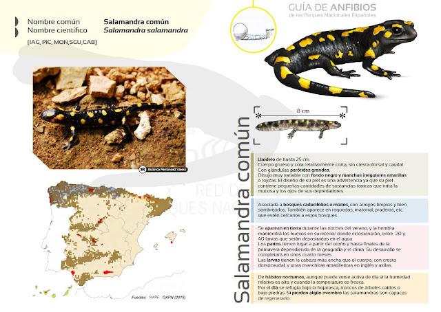 http://www.mapama.gob.es/es/red-parques-nacionales/red-seguimiento/pima-adapta/fichas-anfibios.aspx