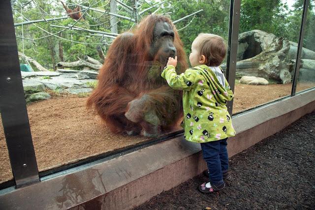 Vườn thú San Diego